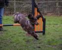 mizti-agility-jumping